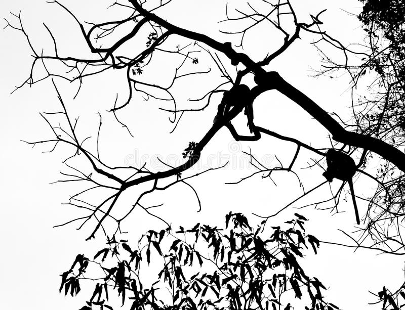 Gibbons στο δέντρο στοκ φωτογραφίες με δικαίωμα ελεύθερης χρήσης