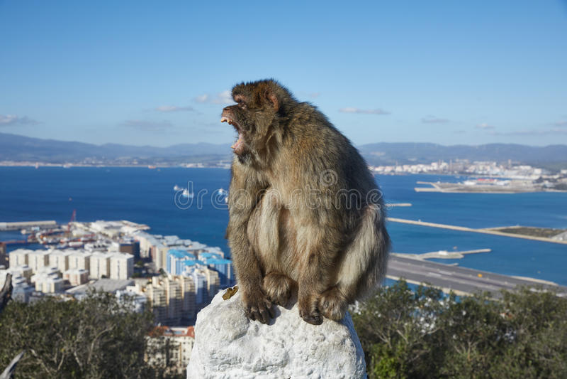 Gibraltar, Sehenswürdigkeiten im britischen Überseebereich auf dem südlichen Spucken der Iberischen Halbinsel, lizenzfreie stockfotos