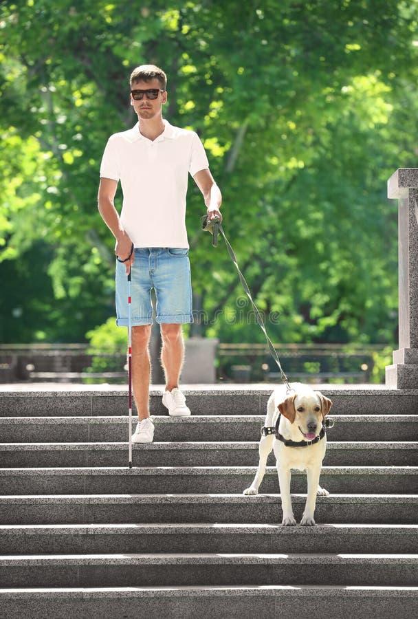 Download Gidshond Die Jong Blinde Helpen Stock Foto - Afbeelding bestaande uit vriendschap, blind: 107702378
