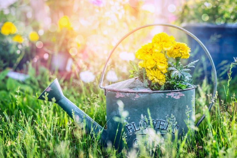 Gießkanne mit Blumen im Gras über sonnigem Sommergarten stockfotografie