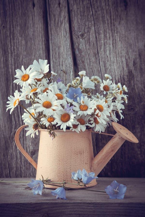 Gießkanne mit Sommerblumenstrauß von Gänseblümchenblumen lizenzfreie stockbilder