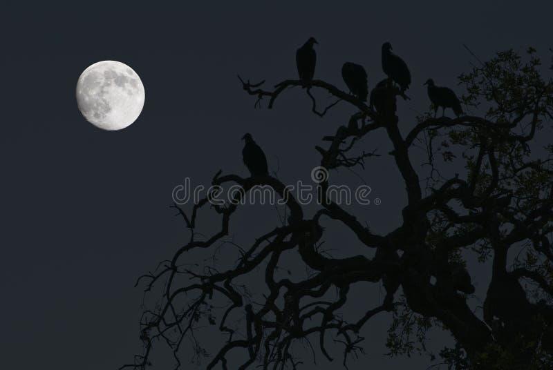 Gieren en een Volle maan stock foto's
