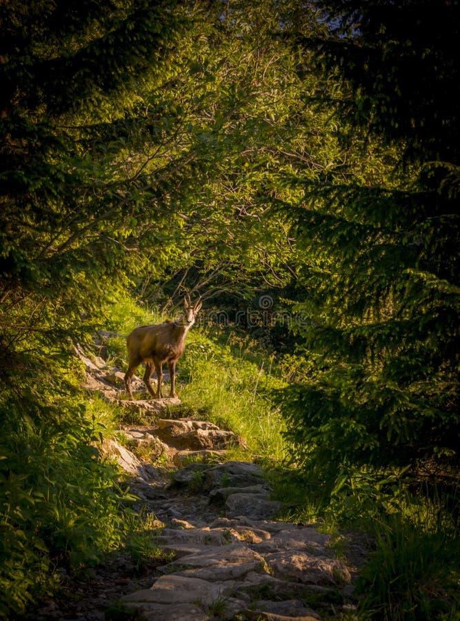 Giewont Zakopane Polen royaltyfri foto