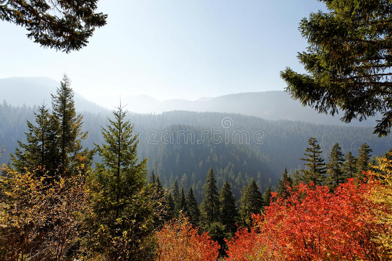 Gifford Pinchot National Forest image stock