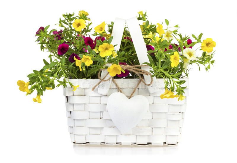 Gift basket with millionbells flowers isolated stock photo