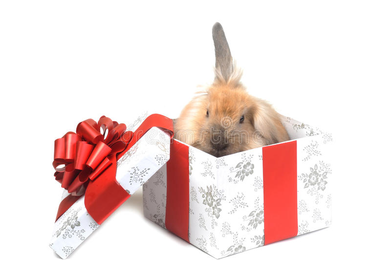 Gift in box royalty free stock images