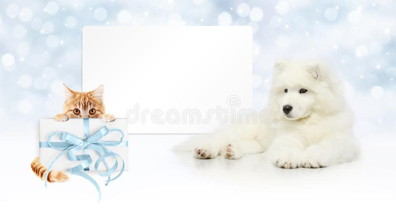gift card, dog and cat with package on christmas lights background, banner copy space template stock images