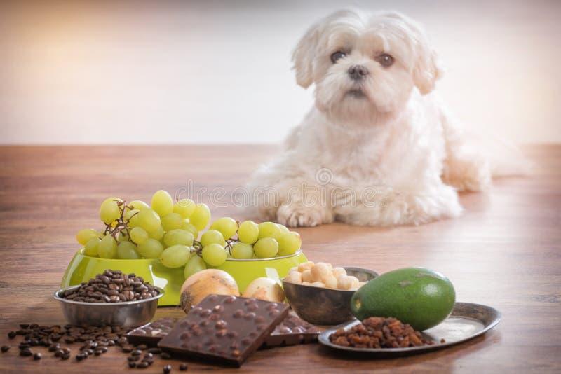 Gift för liten hund och mattill honom royaltyfri foto