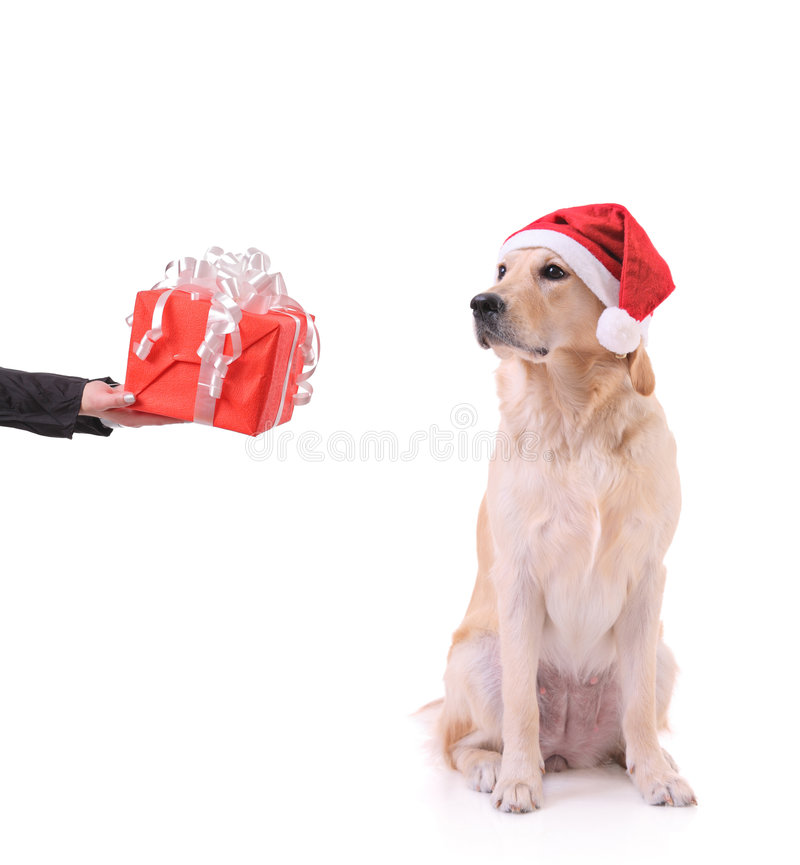 Free Gift For My Dog Stock Images - 6095584