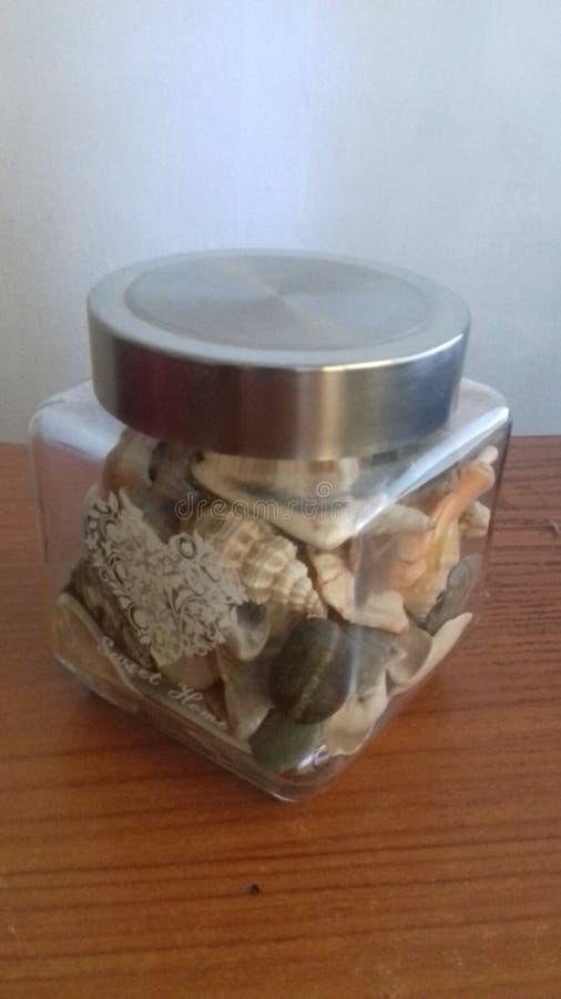 Sea shells royalty free stock photo