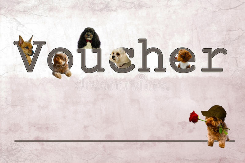 Gift voucher stock image image of bolonka cute australian 68867851 download gift voucher stock image image of bolonka cute australian 68867851 yelopaper Images