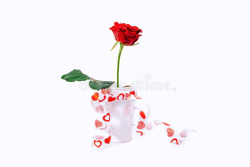 Red rose white background gift cup green valentine day woman february heart ribbon royalty free stock image
