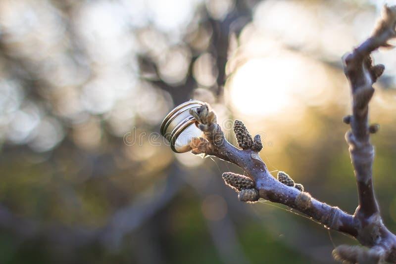 Gifta sig den guld- cirkeln på en trädfilial royaltyfria foton