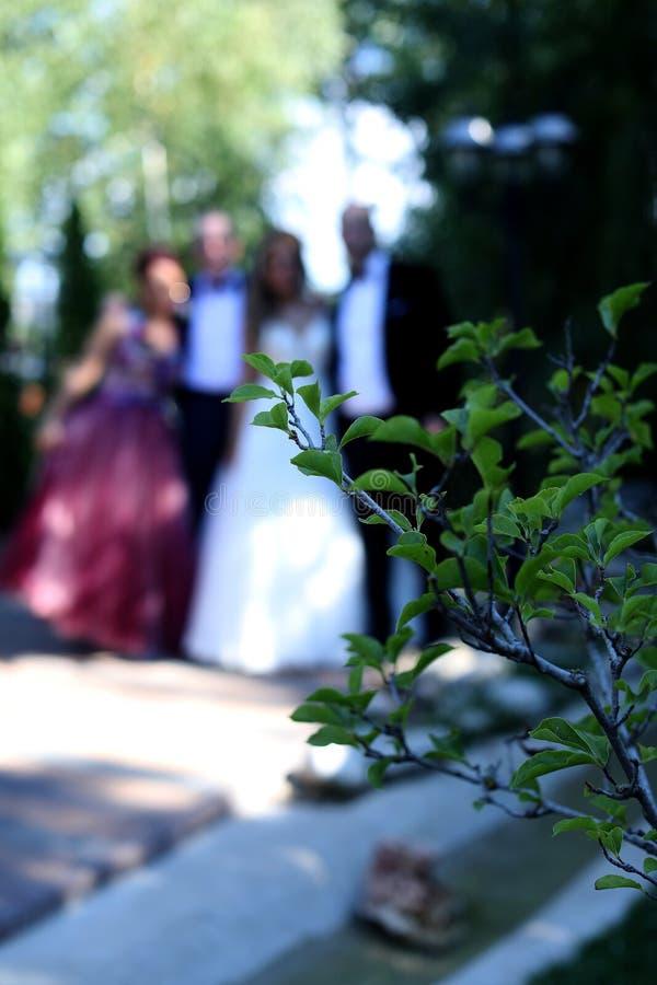 Gifta sig gruppfotografi royaltyfria foton