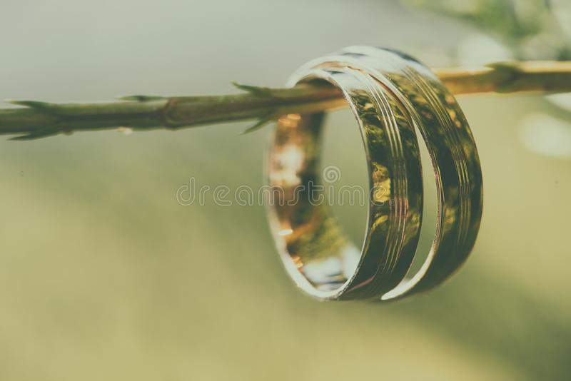 Gifta sig guld- cirklar, på den härliga gröna växten royaltyfri foto