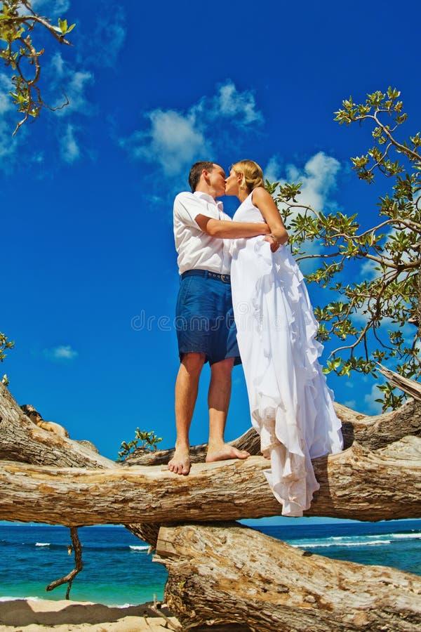 Gifta sig på ett träd royaltyfri foto