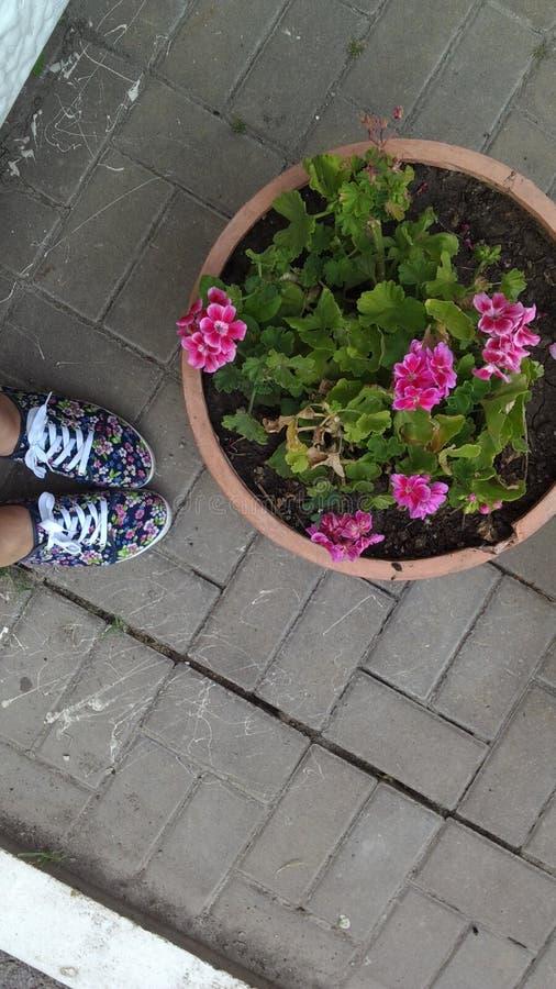Giftbloemen royalty-vrije stock foto's