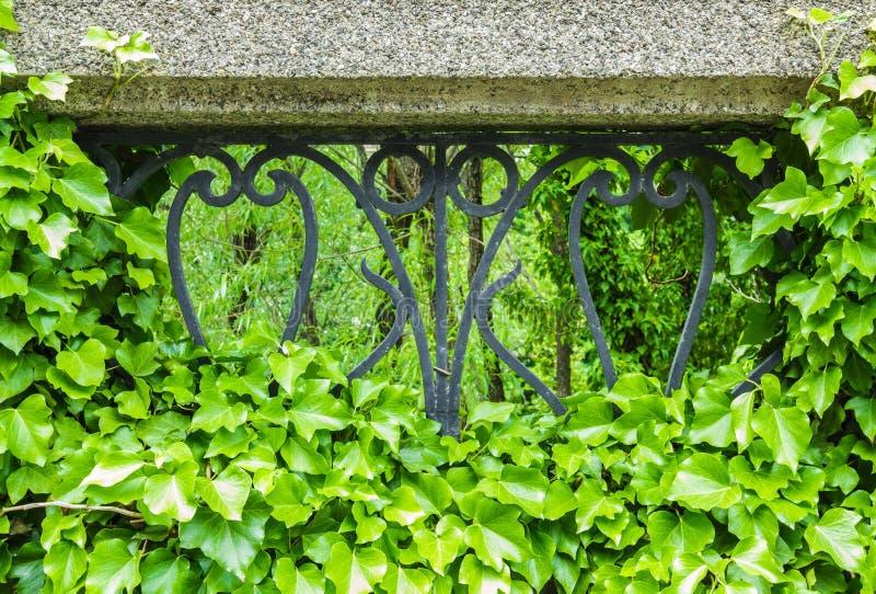 Giftefeu, der auf Zaun im Park wächst stockfotografie