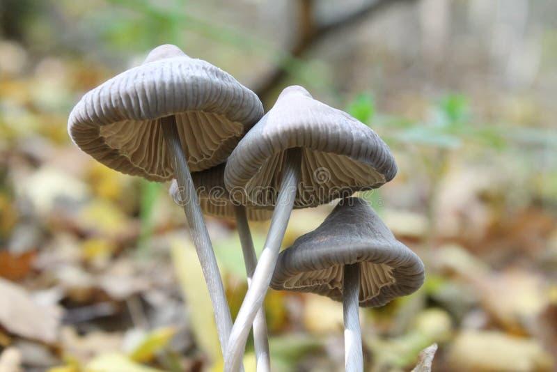 Giftige paddestoel in het bos royalty-vrije stock afbeeldingen