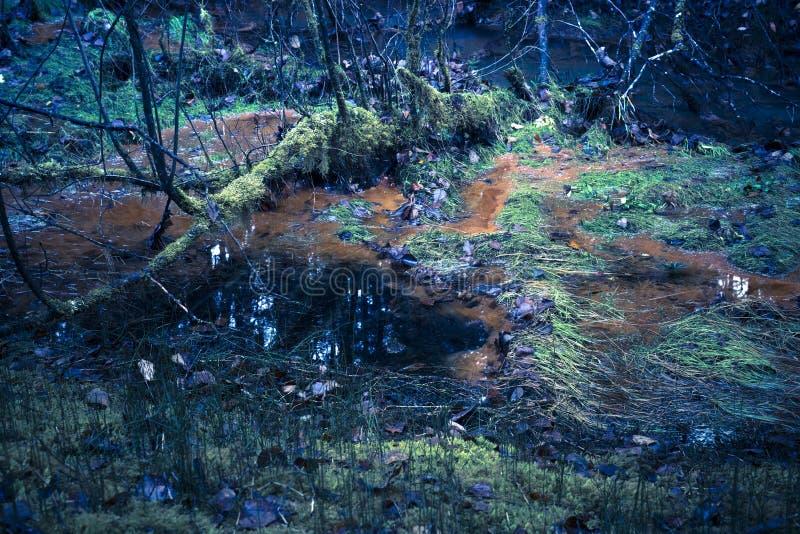 Giftiger Forest Swamp lizenzfreie stockbilder
