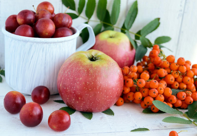 Gifts of autumn: apples, cherry plum, mountain ash on a white background. Still life in yellow, orange, red.  stock image