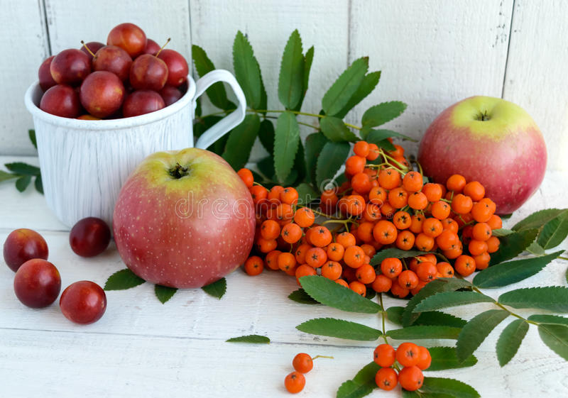 Gifts of autumn: apples, cherry plum, mountain ash on a white background. Still life in yellow, orange, red.  royalty free stock images