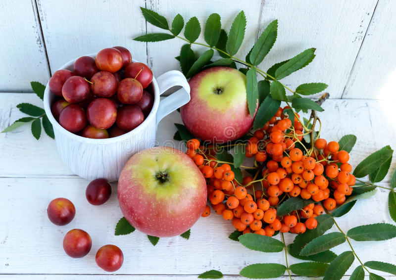 Gifts of autumn: apples, cherry plum, mountain ash on a white background. Still life in yellow, orange, red.  stock photos
