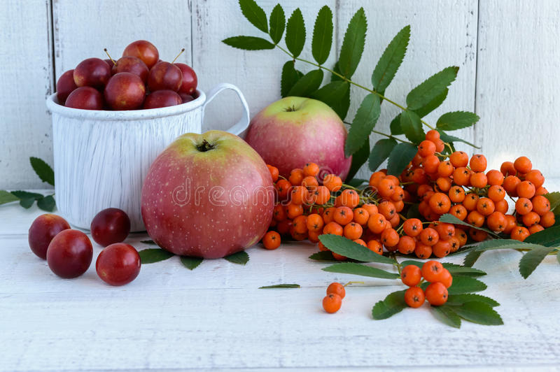 Gifts of autumn: apples, cherry plum, mountain ash on a white background. Still life in yellow, orange, red stock image