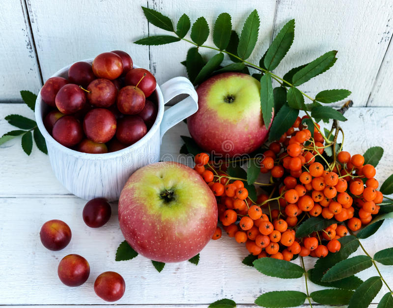 Gifts of autumn: apples, cherry plum, mountain ash on a white background. Still life in yellow, orange, red royalty free stock image