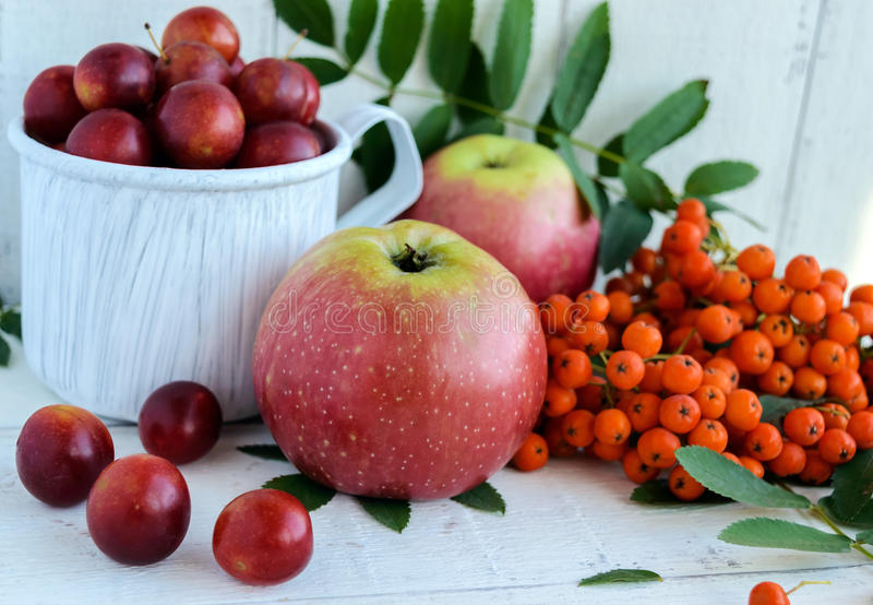 Gifts of autumn: apples, cherry plum, mountain ash on a white background. Still life in yellow, orange, red stock images