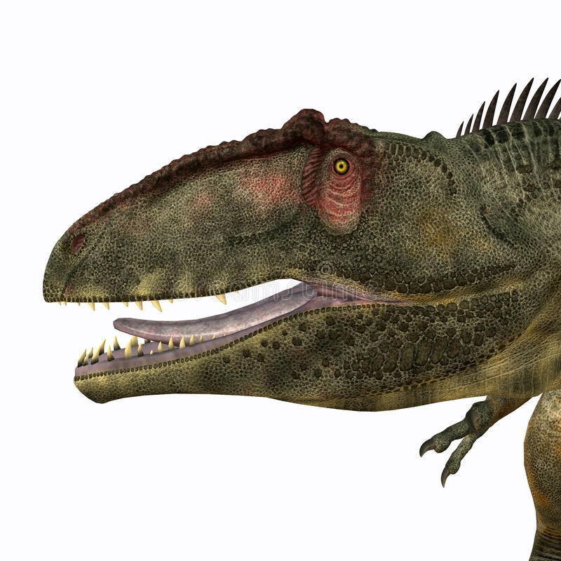 Giganotosaurushoofd royalty-vrije illustratie