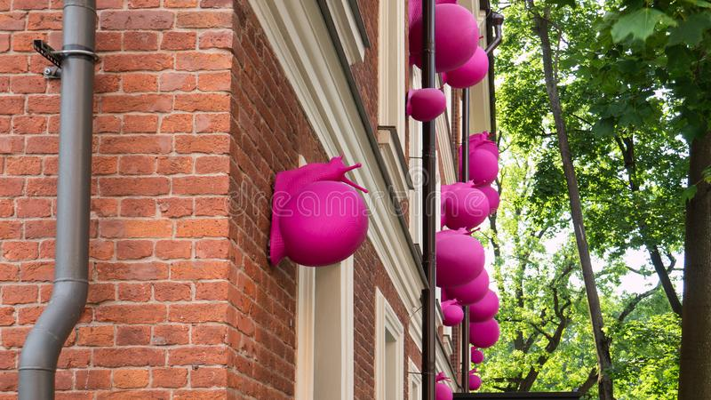 Gigantów ślimaczków różowa wspinaczka na budynku Wielki ślimaczka czołganie wzdłuż ściany fotografia royalty free