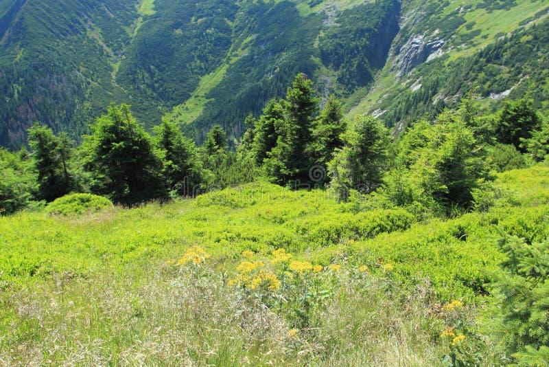 Download Gigant Kopalnia W Gigantycznych Górach Obraz Stock - Obraz złożonej z skłon, natura: 57674837