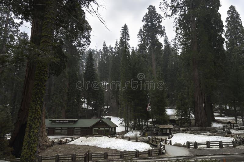 Gigante Forest Museum fotografia stock