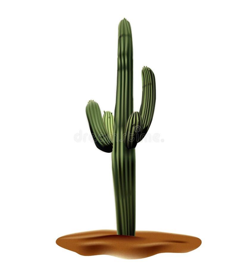 Gigante realista de Carnegia del cactus del desierto Planta del desierto entre la arena y de rocas en hábitat Ejemplo realista de libre illustration