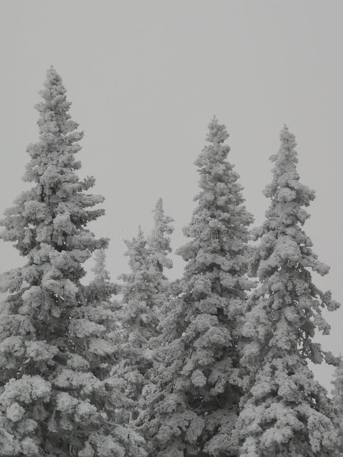 Gigantes forestales bajo la nieve en el fondo de nubes en las montañas de los Urales fotos de archivo