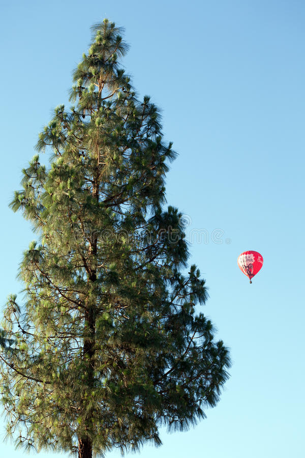 Gigantic Pine and Hot Air Balloon stock image