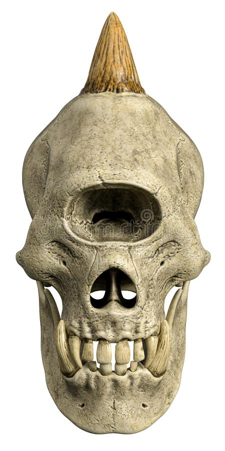 Gigantisk skalle f?r Cyclops i en vit bakgrund stock illustrationer