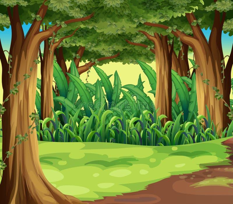 Gigantyczni drzewa w lesie ilustracji