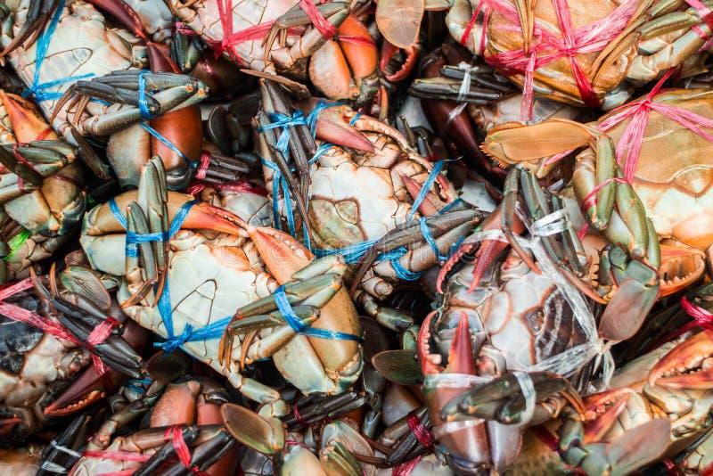 Gigantyczny borowinowy krab na rynku zdjęcie royalty free