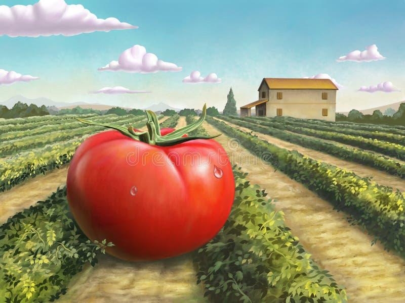 Gigantyczny dojrzały pomidor ilustracja wektor