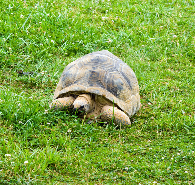 gigantyczny tortoise obraz stock