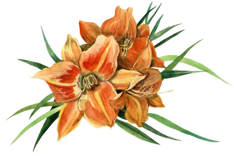 Giglio arancio illustrazione vettoriale