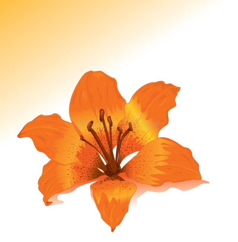 Giglio arancione illustrazione vettoriale