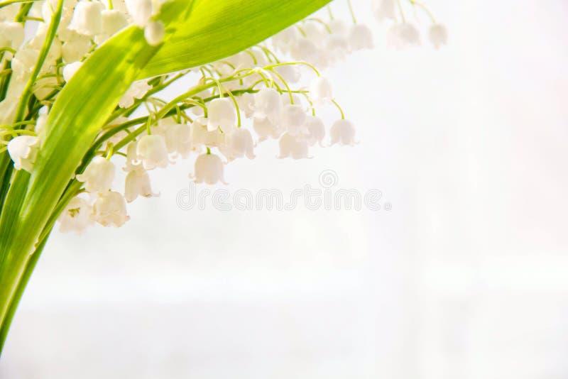 Giglio dei fiori della valle Sfondo naturale con i mughetti di fioritura dei mughetti immagini stock