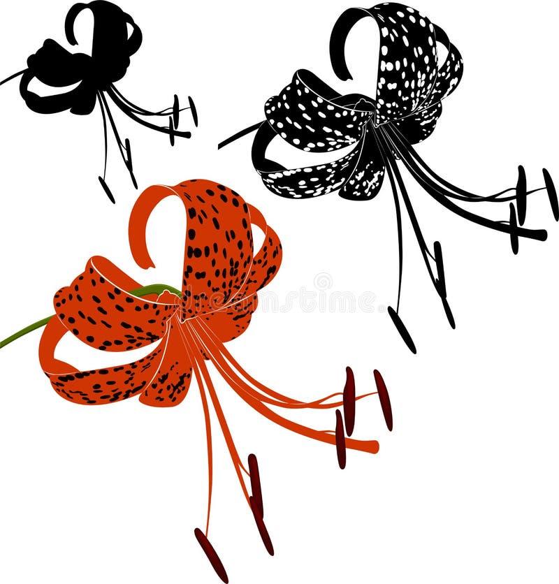 Giglio di tigre illustrazione di stock