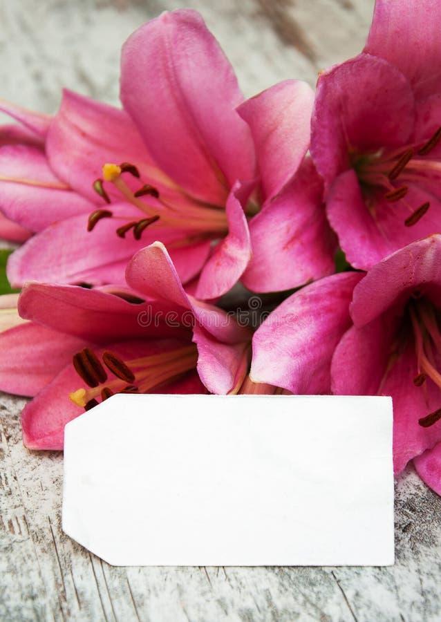 Giglio rosa con l'etichetta fotografie stock