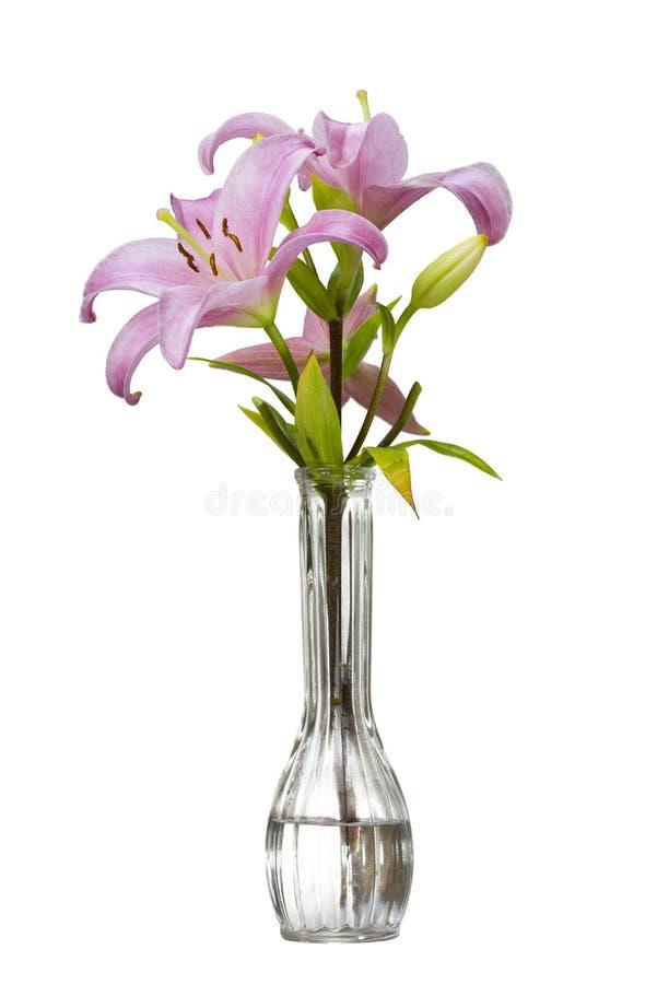 Giglio rosa in un vaso immagine stock libera da diritti