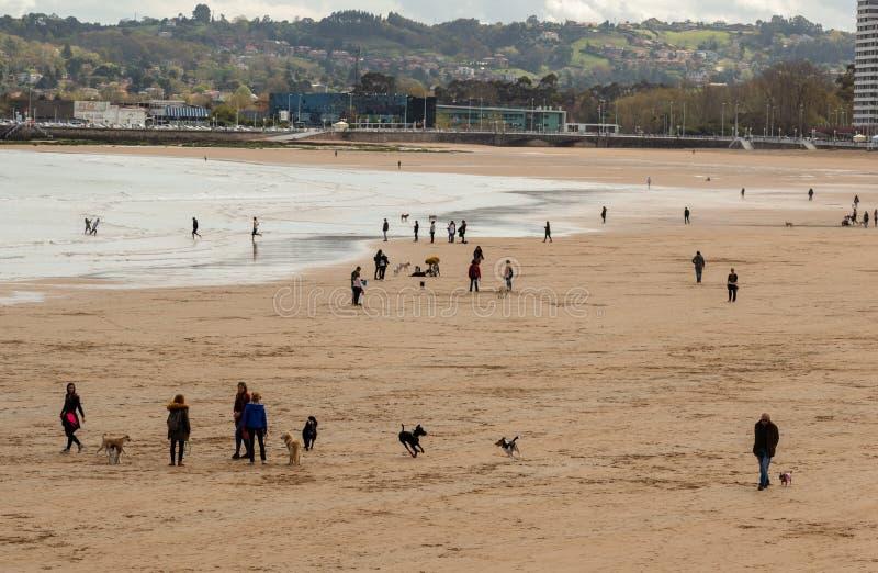 Gijón, Asturias, España, el 9 de abril de 2019 gente disfruta del día en la playa, con sus animales domésticos fotografía de archivo libre de regalías