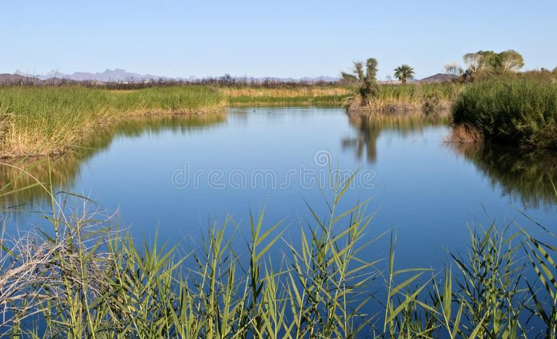 Gila River marsh. Marshes along the Gila River in southern Arizona royalty free stock images